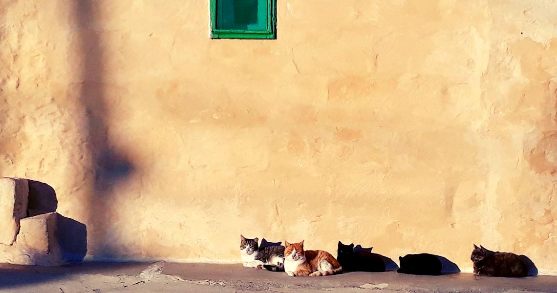 gozo-gatti